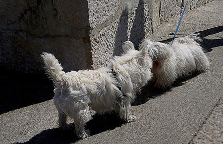 First-time dog owner tips: socialization