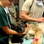 24 Hour Emergency Vet Hospital: Philadelphia, PA