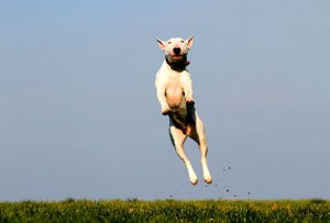 Dog Exercise Needs By Breed (Basic Guide & Time Chart)