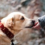19 Health Benefits Of Having A Dog In Your Life