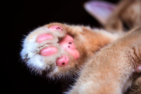 Now that is a nice cat paw!