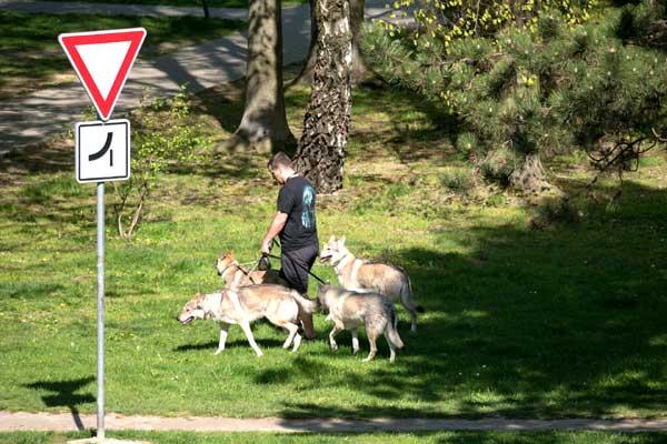 14 Dog Walking Skills: Become or Hire a Dog Walker