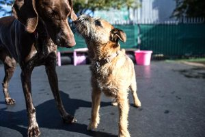 9 Philadelphia Dog Parks: Find A Park Near You
