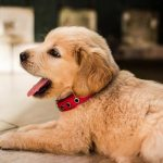 Top Female Dog Names 2019: 122 Dog Names & Their Meanings