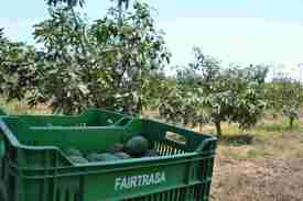 Fairtrasa provide the boxes for the coop