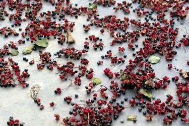 poivre fleur de Sichuan