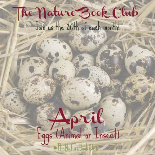 Eggs Nature Study {The Nature Book Club}
