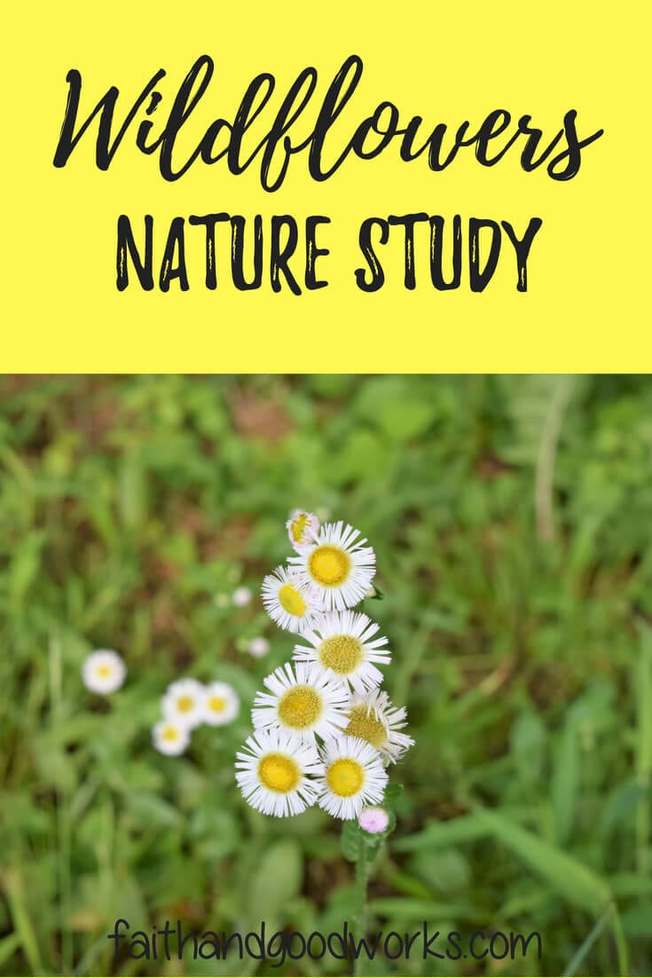 Wildflowers Nature Unit Study {Nature Book Club}