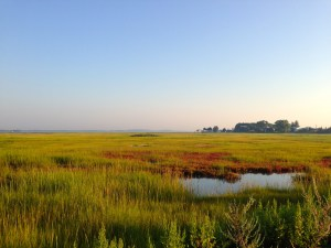 Marsh Near Great Neck. Photo Credit: Alex Kato