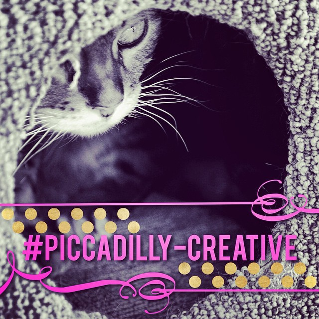 Piccadilly Creative | Faith, Hope, Love, and Luck Survive Despite a Whiskered Accomplice