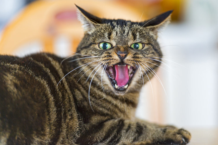 Vox - What Research Says About Cats | Faith, Hope, Love, and Luck Survive Despite a Whiskered Accomplice