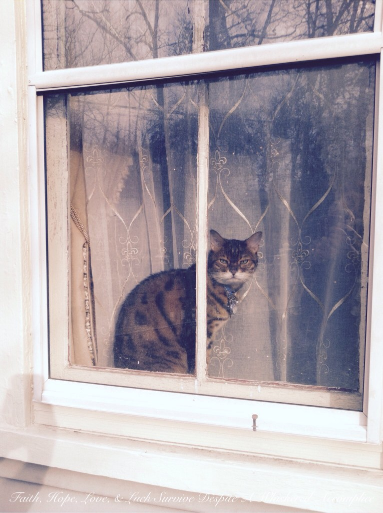 Happy Caturday! - 04/25/2015 | Faith, Hope, Love, and Luck Survive Despite a Whiskered Accomplice
