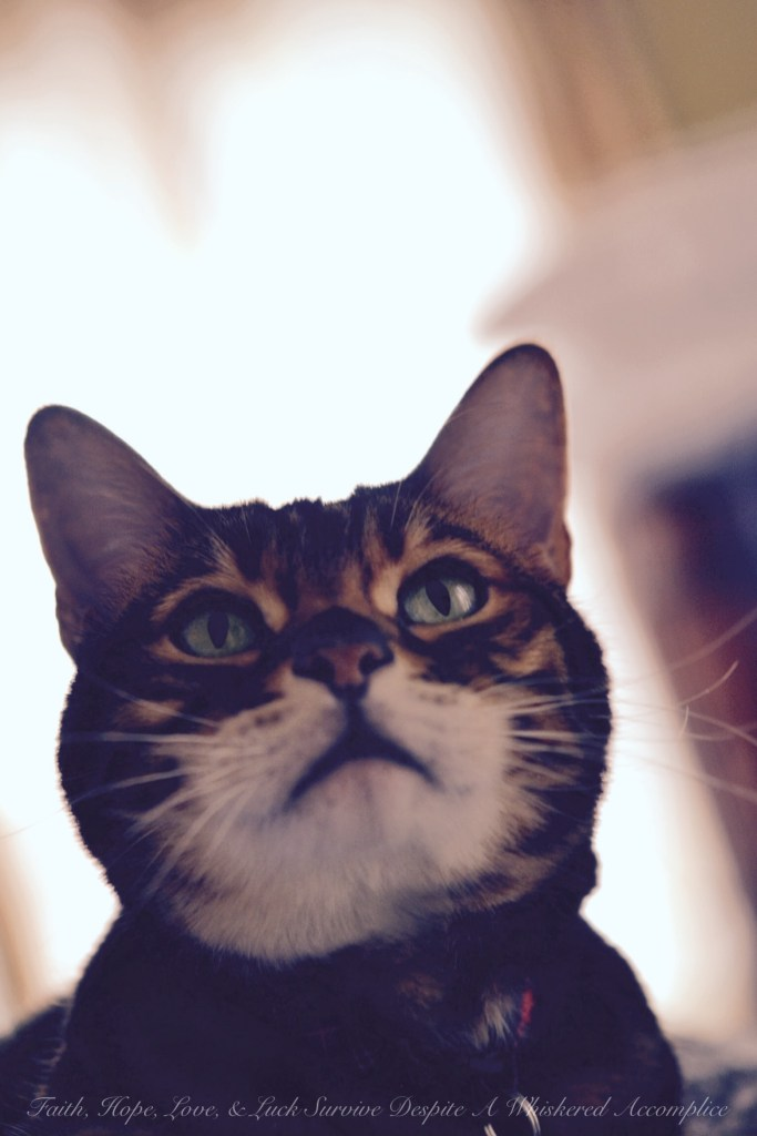 Happy Caturday! - 02/28/2015 | Faith, Hope, Love, and Luck Survive Despite a Whiskered Accomplice