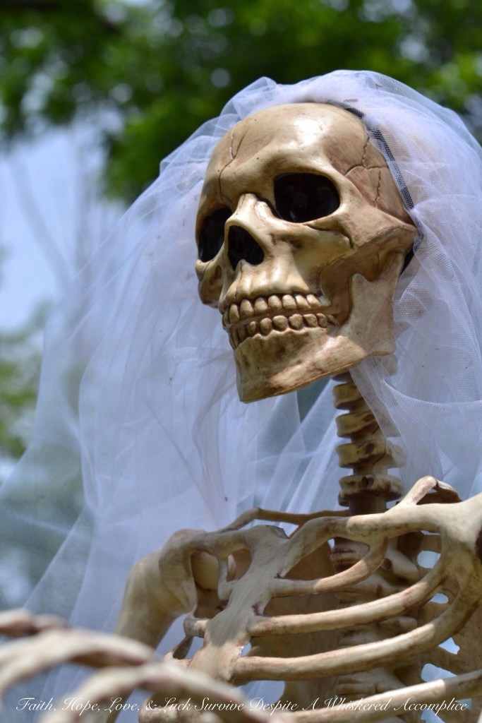 Special Wedding Guests | Faith, Hope, Love, and Luck Survive Despite a Whiskered Accomplice