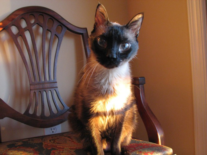 His Royal Highness | Faith, Hope, Love, and Luck Survive Despite a Whiskered Accomplice