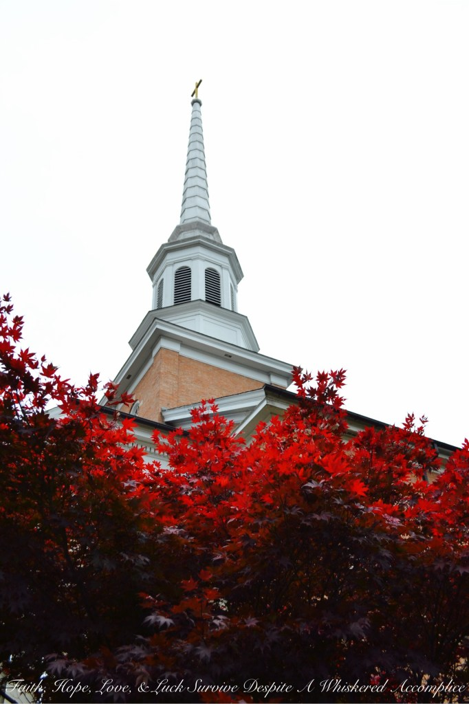 Falling Leaves in Cumberland | Faith, Hope, Love, and Luck Survive Despite a Whiskered Accomplice