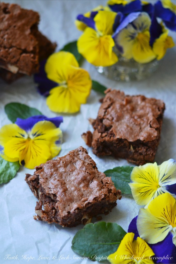 Milk Chocolate Coconut Brownies | Faith, Hope, Love, and Luck Survive Despite a Whiskered Accomplice