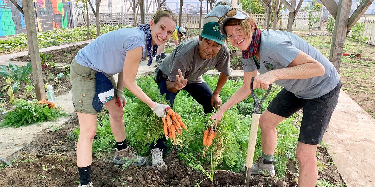 A team from North Carolina helping to harvest carrots in the Naranjito garden