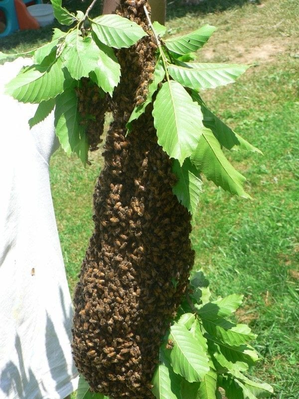 bees17