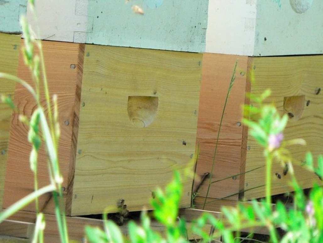 summer bees 2011