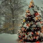 Top Posts for November 2012