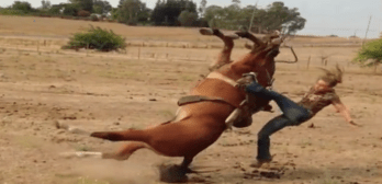 3 times horses teach people respect