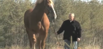 Guinees wold record tallest horse