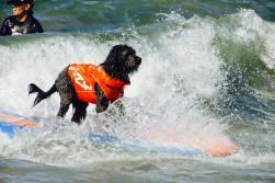 SurferDog3