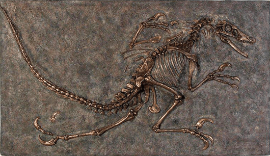 Velociraptor_Fossil_Wall_Frieze_Natural_VFWFN