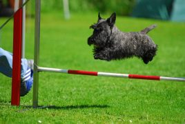 agile scottie