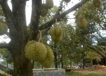 Tulus Asih Group Bidik Bisnis Agrowisata