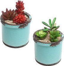 turquoise succulent planters for bathroom