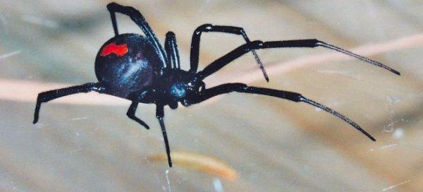 Ядовитые пауки заползают в дома жителей Херсонщины ...