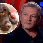 Коронавирус и животные: Пальчевского поймали на наглой лжи