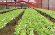 Agricultores Familiares podem participar de chamamento público para atender a Merenda Escolar em Ubatuba