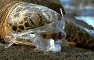 Ilhabela audiência pública discute proibição de copos e sacolas plásticas