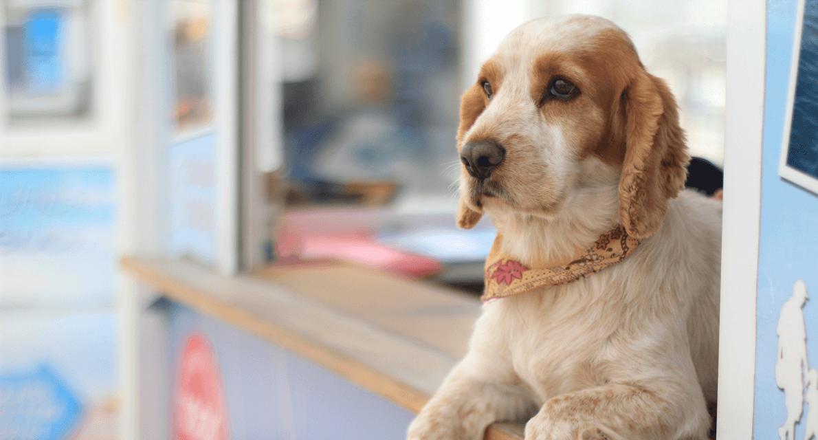Pet Terapia: Cães auxiliam crianças e adultos com deficiências