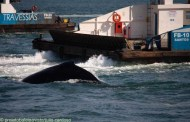 Dersa informa possibilidade de paralisações na balsa para passagem de baleias