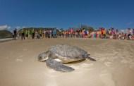 Tamar e Petrobras anunciam a chegada da tartaruga protegida 40 milhões