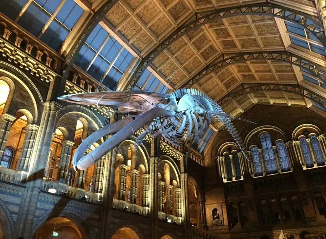 Natural-History-Museum-Whale-banner-image