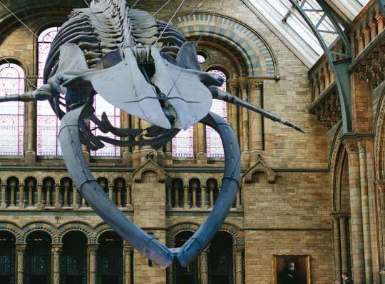 Natural-History-Museum-Whale