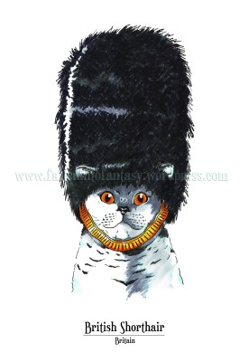 Feline Origin: British shorthair