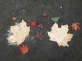 weather leaves 15 test leaves