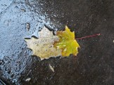 weather leaves 3 cc phillips