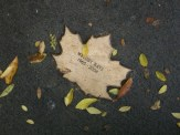 weather leaves 5 melody rayl