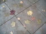 weather leaves group 3 noel house
