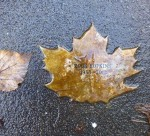 Rock Hopkins Leaf of Remembrance