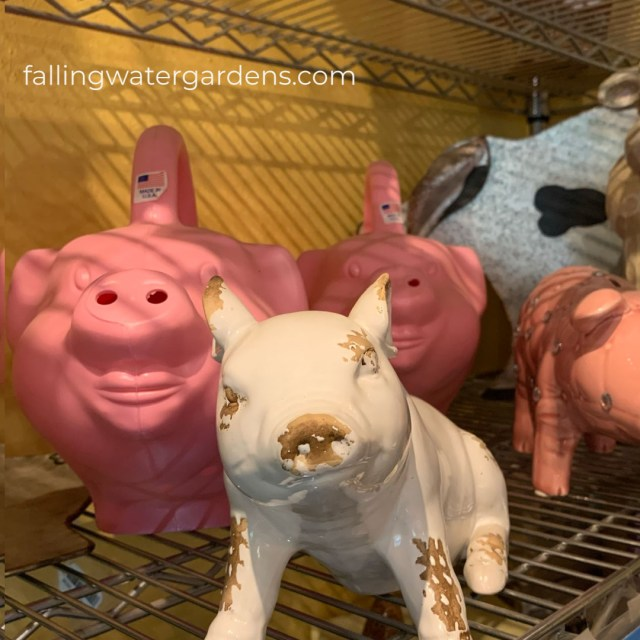 Piggie Gifts in the Gift Shop at Falling Water Gardens in Monroe Washington