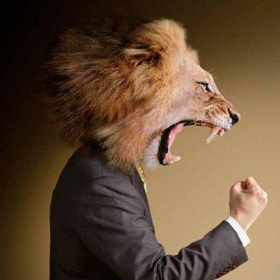 immagine leone