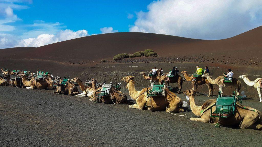 Lanzarote-travel-guide-timanfaya-nationalpark-kamele-reiten-dromedar (1 von 1) (1)